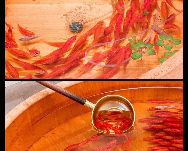 Pesci dipinti in3D