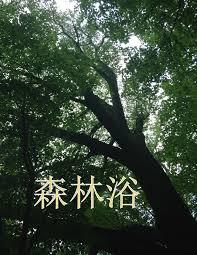 Shirin-yoku – bagno nella foresta              La teoria giapponese per rigenerarsi nellanatura